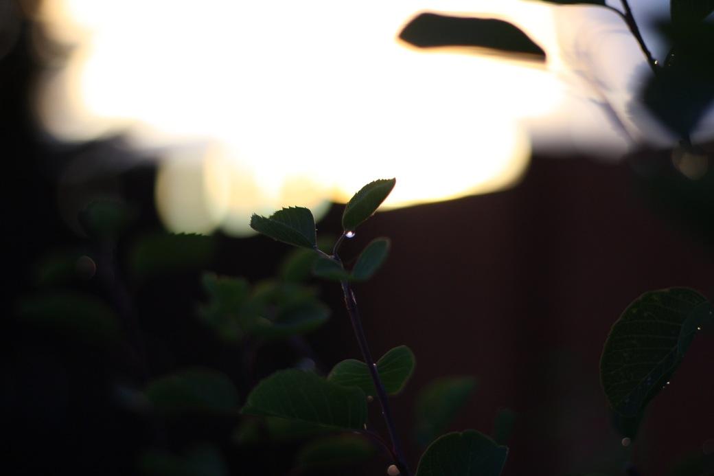 dawn branch